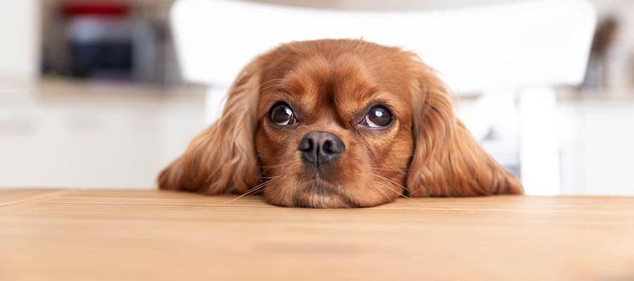 05-Bolido Product PetFood-dog-1